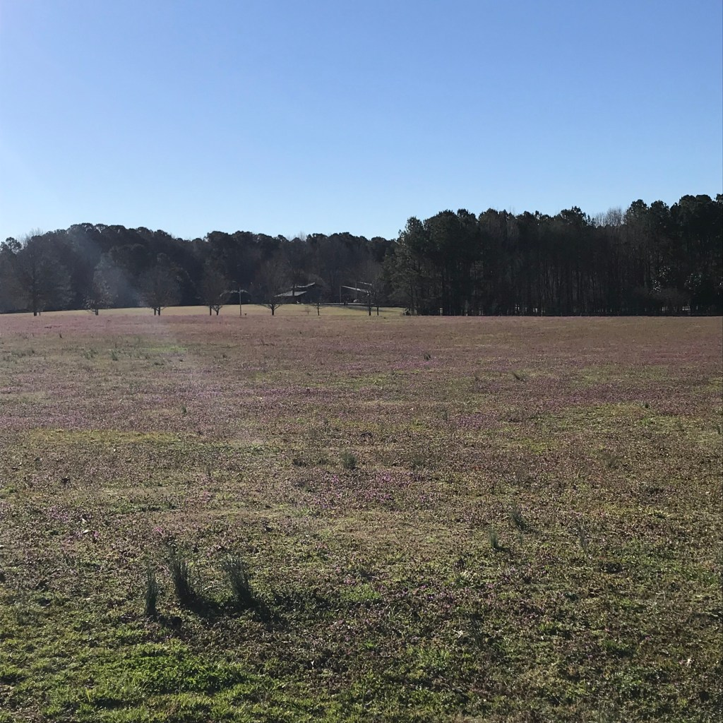 an open, sunny field at Lake Benson Park in Garner, NC